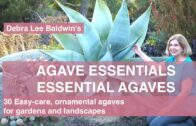 Agave Essence: 30 easy-care ornamental agaves that can be used