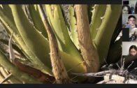 Desert Garden-Andrew Torres