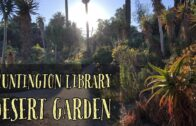 Desert Garden at Huntington Library in August 2020