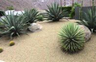Mojave Desert MVP (Most Valuable Plant)