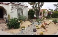 Establish a low water level, low maintenance garden desert landscape