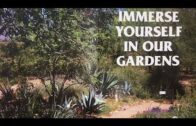 Gorgeous desert garden tour in the center of Pima Master