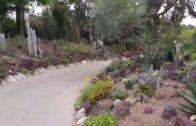 Huntington Garden 4-Desert Garden