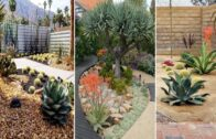 Top 70 best desert landscaping ideas | DIY garden