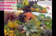 40+ Easy diy drought-resistant landscape design idea #7