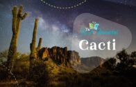 Anecdote about cactus, goodness and beauty