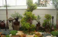 Brian's garden and landscape design. Philippines`