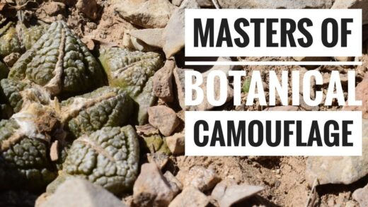Cacti, Live Rocks, and Chihuahua Desert Ruins in West Texas