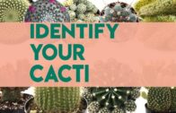 Cactus identification | name of cactus (over 30 years old)