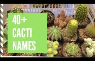 Cactus name and picture-cactus type and logo
