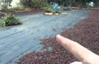 California Water Saving Lawn