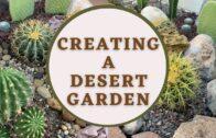 Creating a Desert Garden (Part 1) | Cactus Garden |