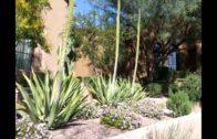 Desert beautification for beginners