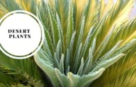 Desert plants | Arizona plants that let us walk and