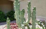 Easy-care desert landscaping I outdoor version I green