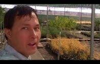 Edible landscaping plants used in desert gardening