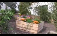 From muddy soil to incredible gardens and edible landscapes in