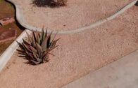 Front yard desert landscaping creative finale decomposes granite cleanup