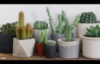 How to grow succulents and cacti Mitre 10 Easy As