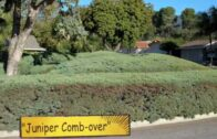 """Landscaping mistakes: misplaced plants """"Crime of gardening"""""""