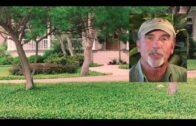 Southwest Home Gardening: Landscape Trees