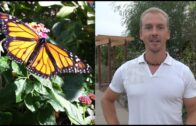 My favorite Arizona desert botanical gardening-monarch butterflies and bees