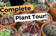 Plant Collection Complete Tour Part 2 | Cacti, Succulents, Desert