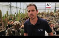 Promote rare cacti to people
