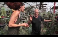 Propagation of Cacti and Succulent Plants—Plant Number One on Me—034