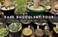 Rare Succulent Plants and Cactus Nursery Tour in Tokyo |