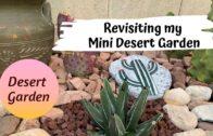 Revisit my mini desert garden