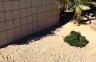 Rocky pi desert landscaping