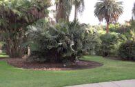 San Marino, California-Huntington Botanical Garden Palm Garden HD (2014)