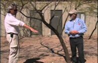 Southwest Parks and Gardens-Desert Botanical Garden-Proper watering of trees and