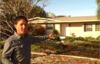 The front yard garden in the Las Vegas desert grows