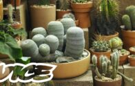 This shop wants to ensure that your cacti are sourced responsibly and respected