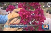 Video: Simple plants for desert landscaping