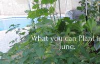What can you grow in June Desert Garden 9b zone