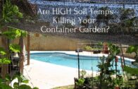 Will high soil temperatures kill your container garden?
