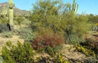 An example of the natural Sonoran desert landscape