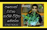 Cactus, cactus, how to grow Sinhala and cactus cultivation, cactus