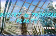 Desert and Tropical Plants-New York Botanical Garden