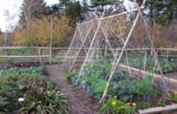 Gardening without irrigation: or not much, anyway Steve Solomon |