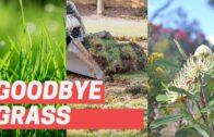 Goodbye grass