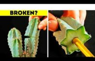 How to propagate cacti, succulentsand other plants | propagation DIY