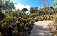 Huntington Library Walking Tour-Rare Southern California Rain-Cactus | Japanese |