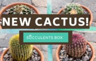 New cactus plants from the Succulents Box | #美食#succulentsbox