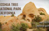 Prosperous Desert-Joshua Tree National Park