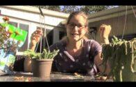 Sage cactus reboot
