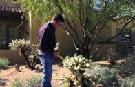 Sean Hahn lives in the desert with Jumping Chora